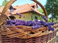 Bodzavirág Vendégház Tiszafüred - Szallas.hu