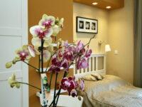 Orchidea Apartman Eger - Szallas.hu