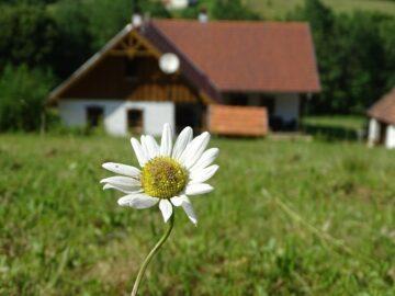 Pagony Pihenő Farm Orfalu - Szallas.hu