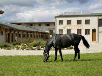 Pro Equus Lovaspark Bagod - Szallas.hu